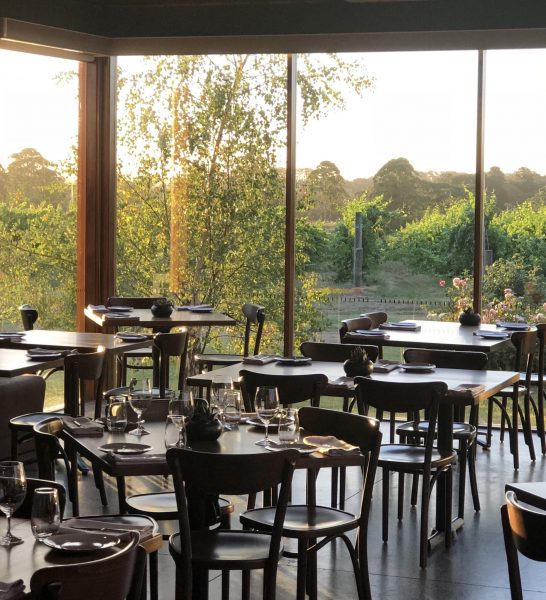 Panoramic view of vines from Restaurant